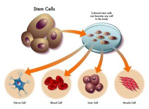 stem-cell-characters