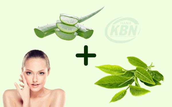 Nha đam và dầu cây trà sẽ là một hỗn hợp – một cách vô cùng hay để chống lại mụn nhọt nhẹ và trung bình